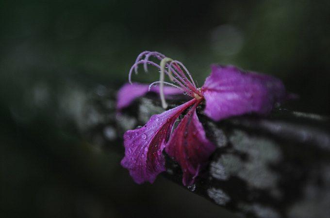 flower-flora-pink-close-up-macro-photography-petal-1455583-pxhere.com